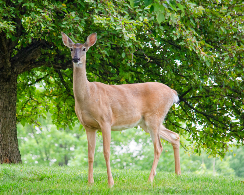 What Mama Deer Can Teach Sales Managers