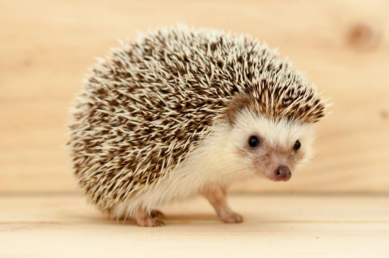 Hedgehog Your Sales Organization